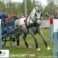 Golden Wheel CUP Winner Single France , CAI-A Altenfelden Winner 2008