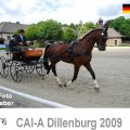 CAI A Dillenburg Dressage EMOTION Picture