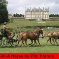 CAI-A Haras du Pin Golden Wheel CUP Partner Four in Hand Driving 2009