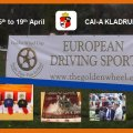 GOLDEN WHEEL CUP 2009 First Serie for Single , Pairs and Four in Hand Driving. CAI-A Kladruby has started very well this secound Year of 