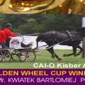 Kwiatek Bartolomiej POL Winner Golden Wheel CUP , FINAL CAI-O Kisber AZAR