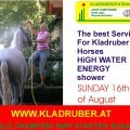 Best Service for the Kladruber Horses  Shower with high Energy Water..from ALTENFELDEN KLADRUBER Driving CENTER for international Training and CAI-A Starter....www.kladruberzentrum.at <br />