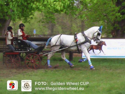 CAI-A Kladruby Golden Wheel CUP Single Driving Marathon