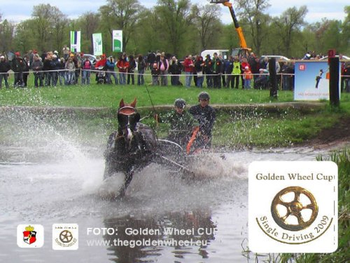 CAI-A Kladruby Golden Wheel CUP 2009 Water Obstacle Single Driving
